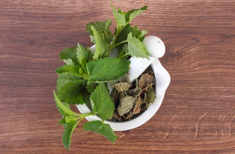 Ny gräsplan och torkad citronbalsam i mortel, herbalism, alternativ medicin arkivbilder