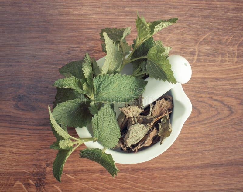 Ny gräsplan och torkad citronbalsam i mortel, herbalism, alternativ medicin royaltyfria bilder