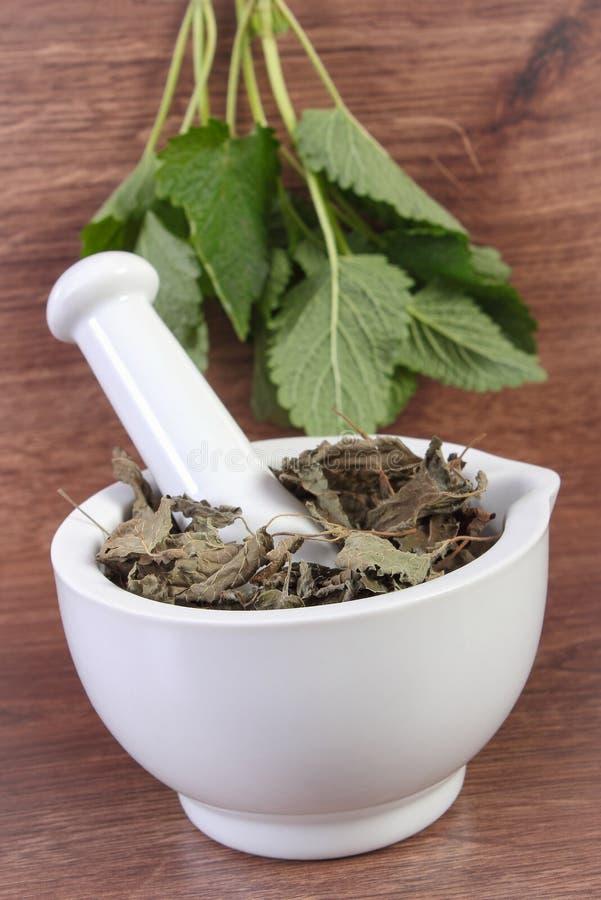 Ny gräsplan och torkad citronbalsam i mortel, herbalism, alternativ medicin royaltyfri fotografi