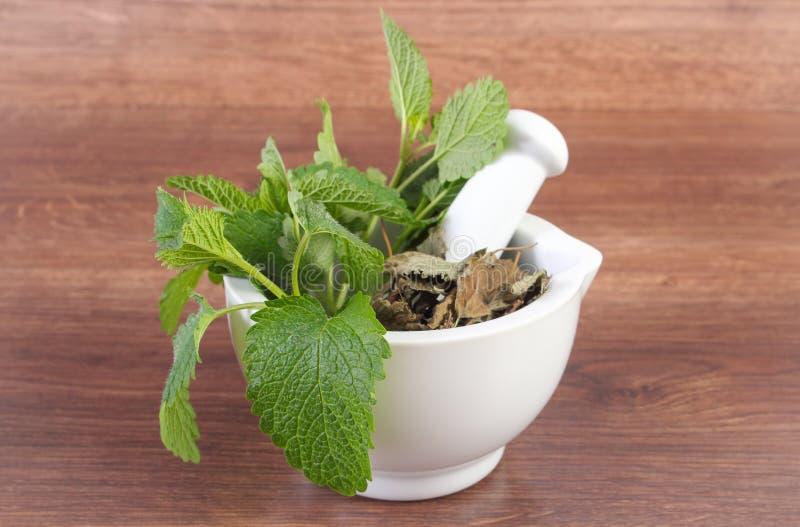 Ny gräsplan och torkad citronbalsam i mortel, herbalism, alternativ medicin arkivbild