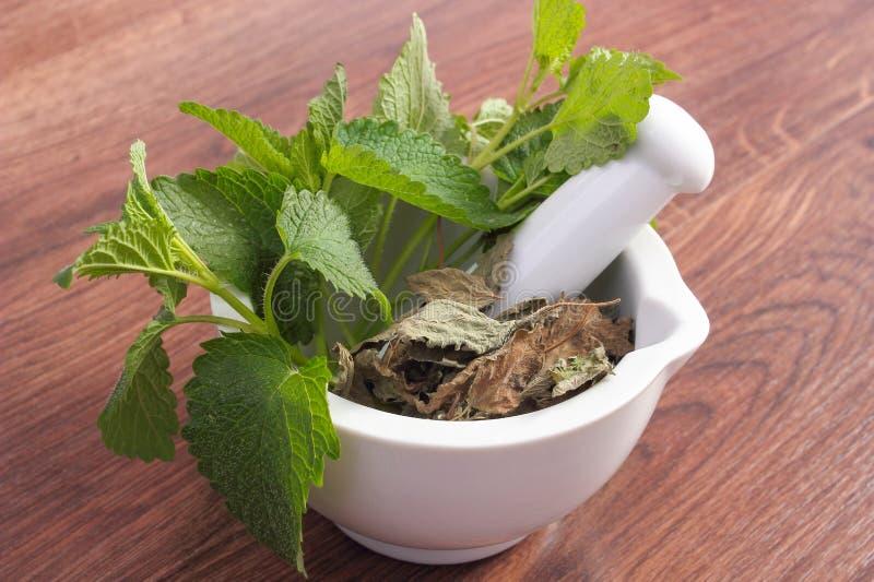 Ny gräsplan och torkad citronbalsam i vit mortel, begrepp av herbalism och alternativ medicin arkivfoton