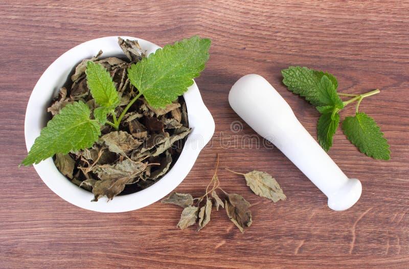 Ny gräsplan och torkad citronbalsam med mortel, herbalism, alternativ medicin royaltyfria bilder