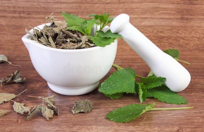 Ny gräsplan och torkad citronbalsam med mortel, herbalism, alternativ medicin arkivfoton