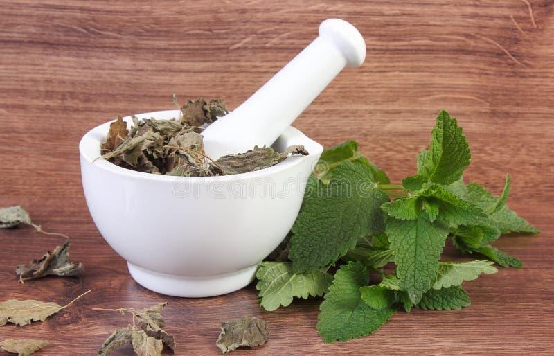 Ny gräsplan och torkad citronbalsam med mortel, herbalism, alternativ medicin royaltyfri bild