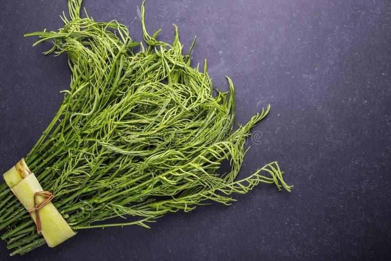 Ny grön akaciapennata för bästa sikt på den svarta stenen arkivbild