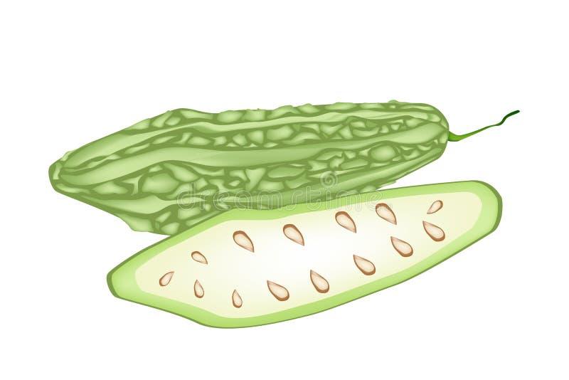 Ny grön bitter squash på vit bakgrund vektor illustrationer