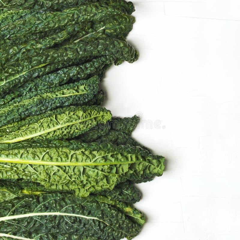 Ny grön grönkål på vit bakgrund royaltyfri foto