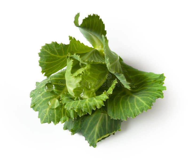 ny grön grönsallat royaltyfri fotografi
