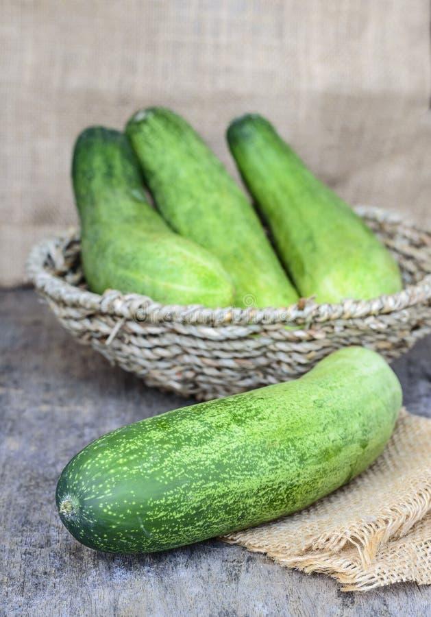 Ny grön gurka royaltyfria bilder