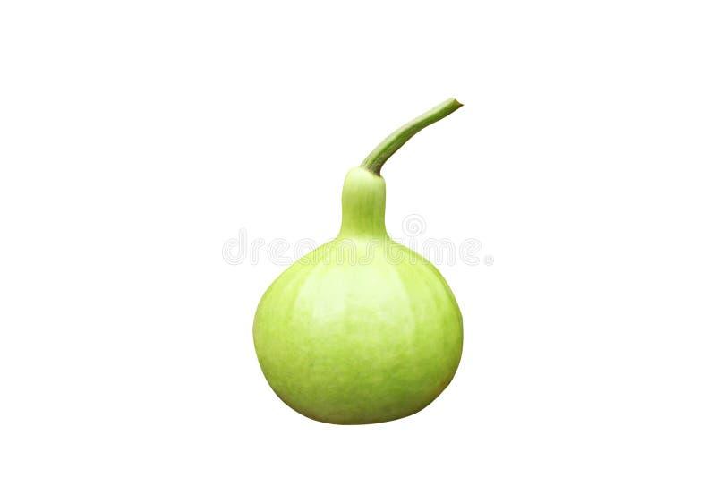 Ny grön kalebass arkivfoto