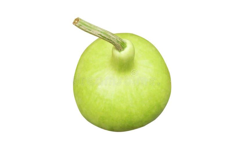 Ny grön kalebass för bästa sikt fotografering för bildbyråer