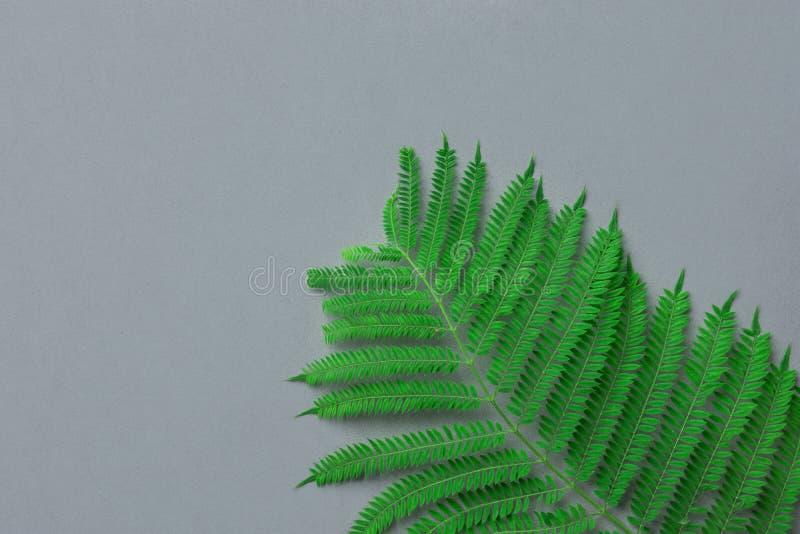 Ny grön ormbunkefilial på grå färgstenbakgrund Minimalisten utformar Botanisk mall Organisk skönhetsmedelwellnessvår arkivbilder
