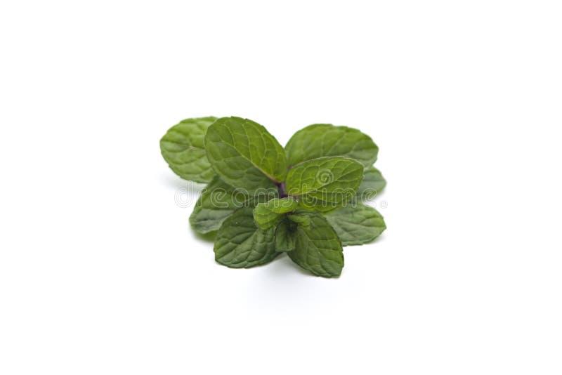 Ny grön pepparmint royaltyfri bild