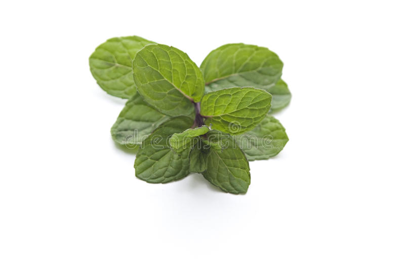Ny grön pepparmint royaltyfria foton