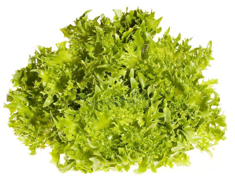 ny grön sallad royaltyfria bilder