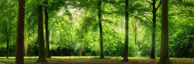 Ny grön skog i drömlikt mjukt ljus royaltyfri foto