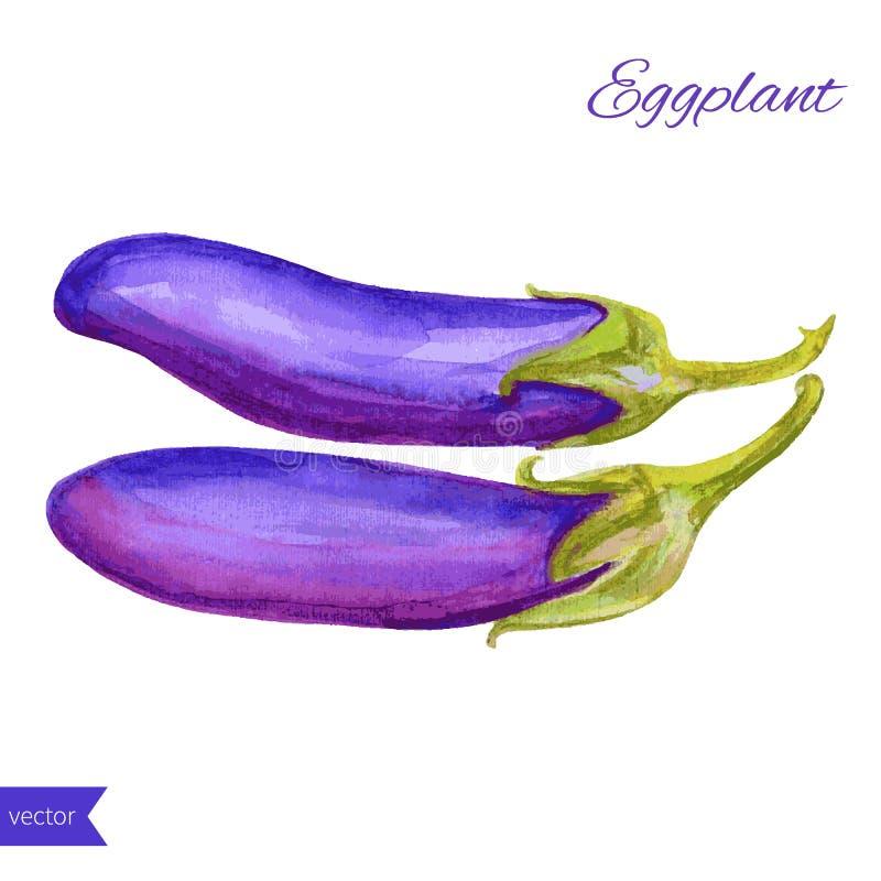 Ny grönsak för aubergine för vattenfärgvektoraubergine som isoleras på vit bakgrund stock illustrationer