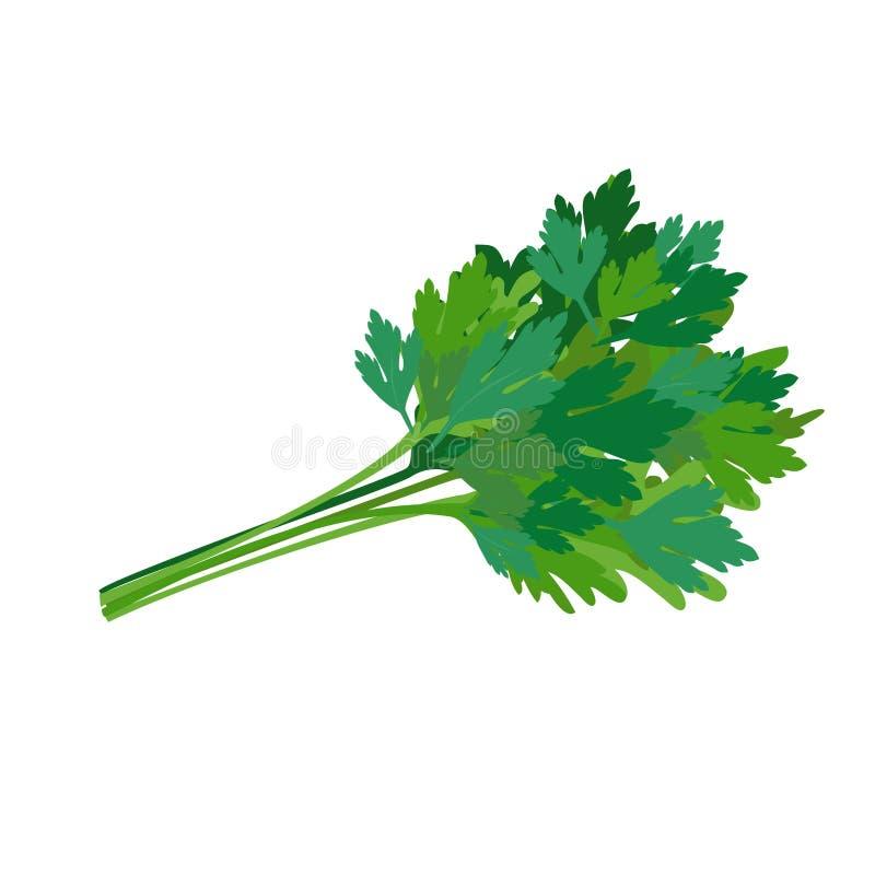 ny gr?n parsley krydda som ?r kryddigt ocks? vektor f?r coreldrawillustration stock illustrationer
