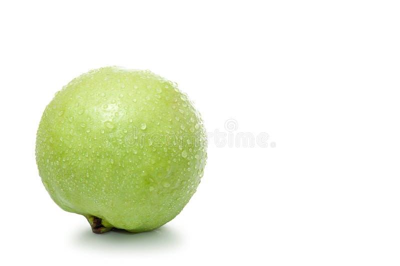 ny guava arkivbild