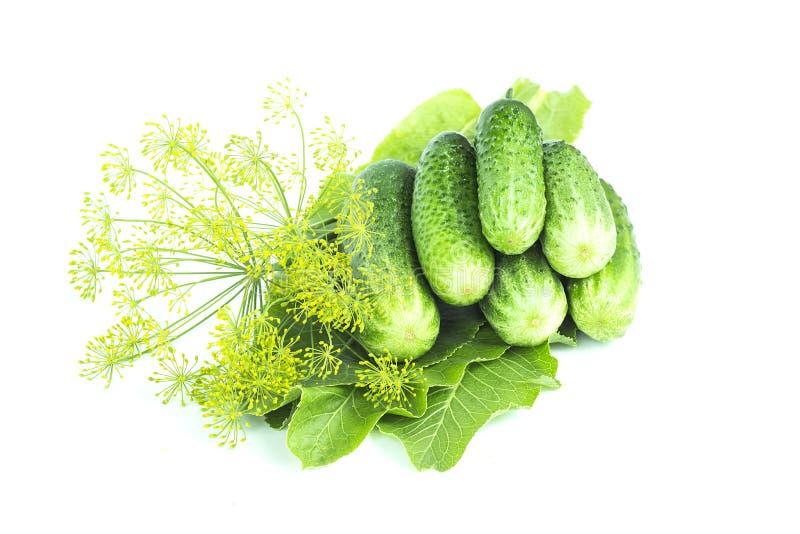 Ny gurkor, pepparrotsidor och dill, ingredienser för knipan, sommarskörd som isoleras på vit bakgrund arkivfoton