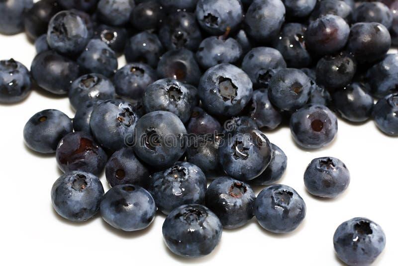 ny hög för blåbär royaltyfria foton