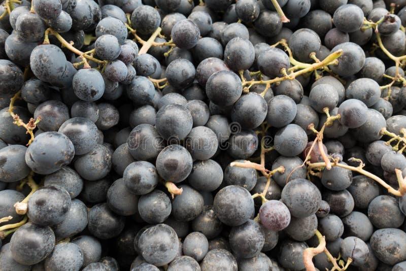 Ny hög för röda druvor på stånd royaltyfri bild