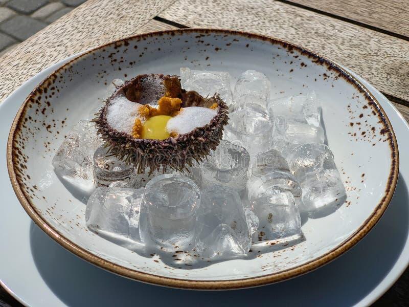 Ny havsgatubarn på is, ny havsgatubarn med vaktelägget i en restaurang på den öppna verandan royaltyfria bilder