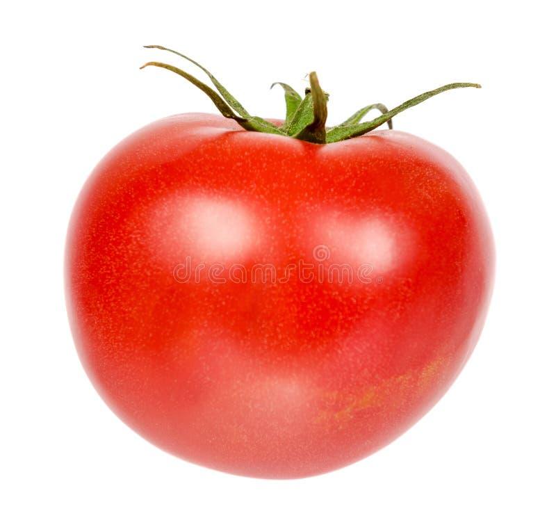 Ny hel rå röd tomat med det gröna bladet som isoleras på vit bakgrund royaltyfri fotografi