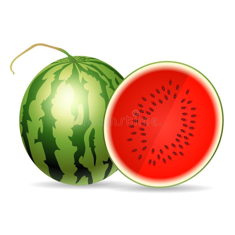 ny isolerad vattenmelonwhite för bakgrund vektor illustrationer