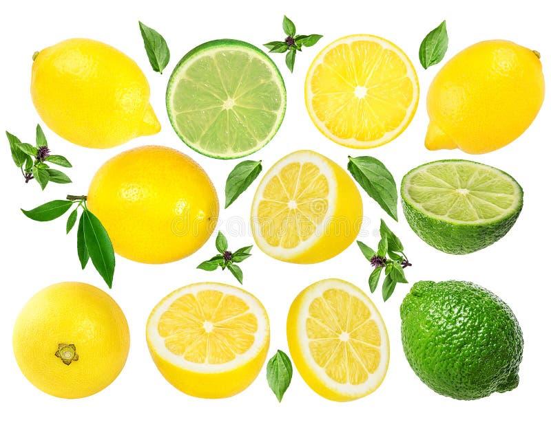 Ny isolerade citron och limefrukt fotografering för bildbyråer