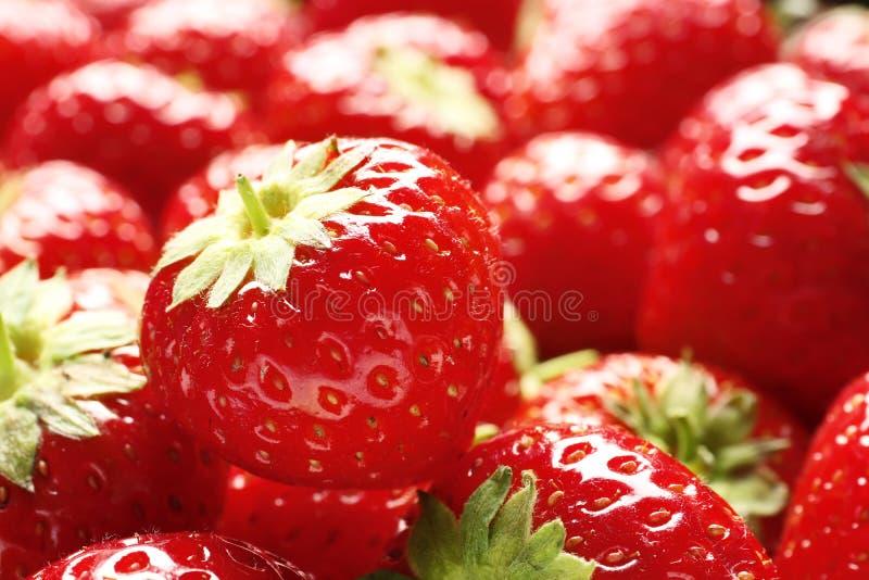 ny jordgubbe f?r bakgrund royaltyfria bilder