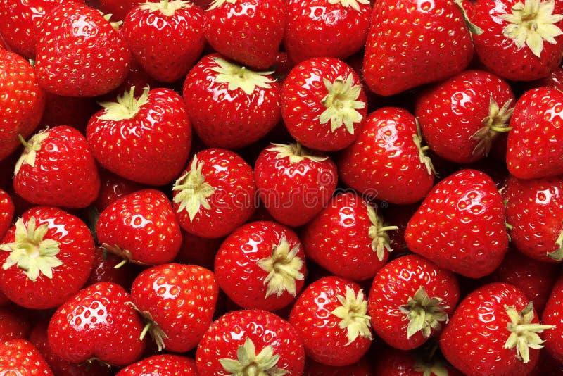 ny jordgubbe f?r bakgrund arkivbilder
