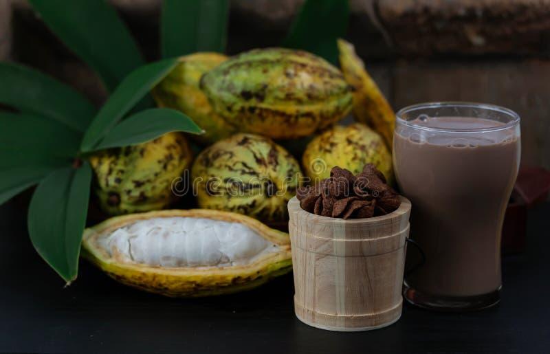 Ny kakaofrukt med produktion för kakaoknastrandeprodukter från kakao arkivfoto