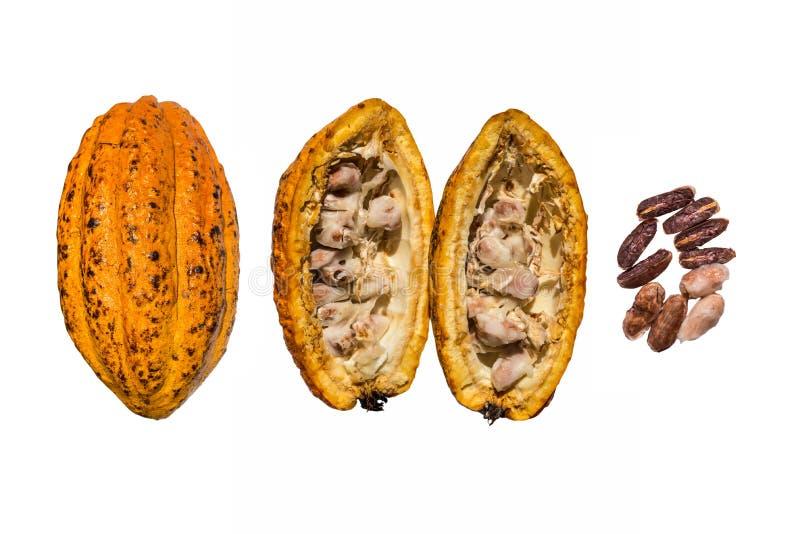 Ny kakaokakao royaltyfri bild