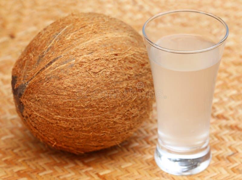 Ny kokosnöt med vatten i ett exponeringsglas royaltyfri fotografi