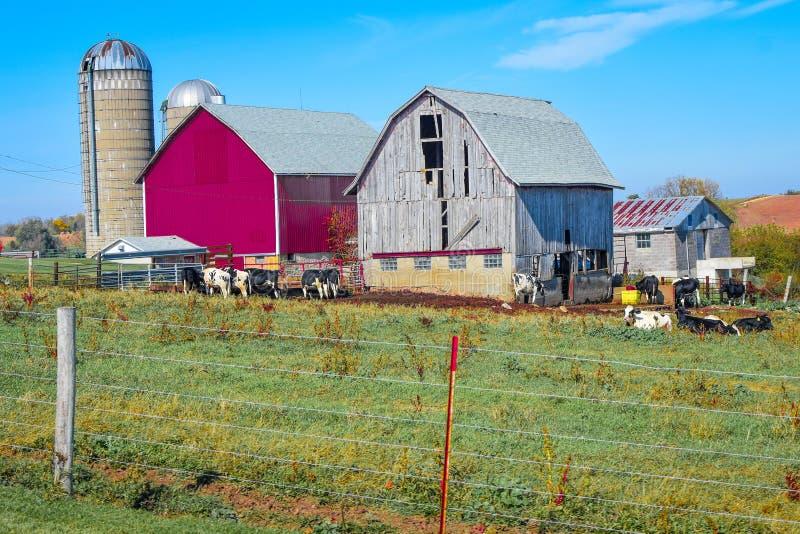 Ny ladugård och gammal ladugård på en Wisconsin lantgård royaltyfri bild