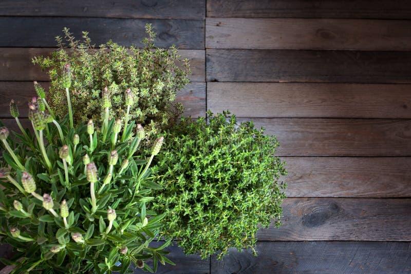 Ny lavendel och timjan arkivbilder