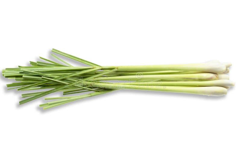 Ny Lemongrass (citronellolja) på vit bakgrund, med fotografering för bildbyråer