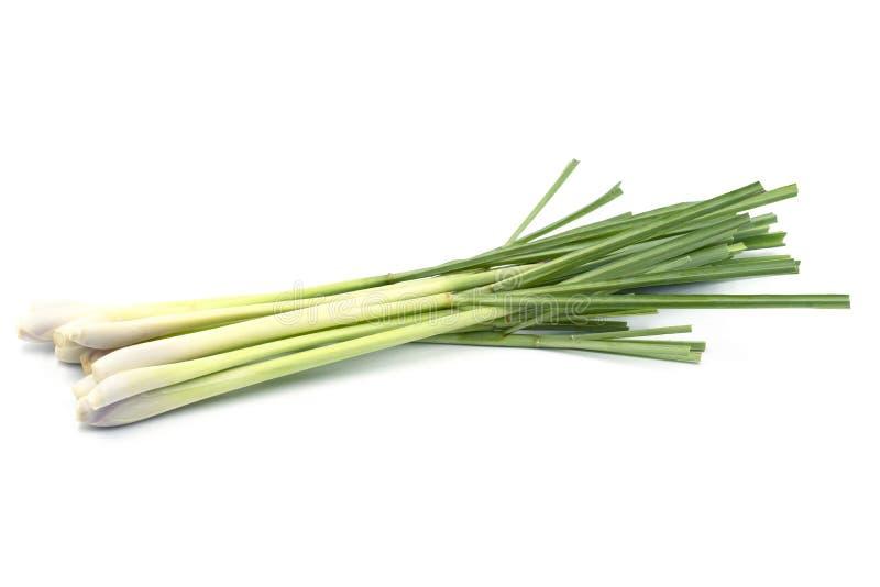 Ny Lemongrass (citronellolja) som isoleras på vit bakgrund royaltyfri bild