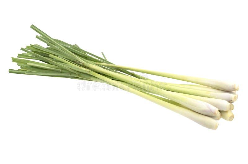Ny Lemongrass (citronellolja) som isoleras på vit bakgrund, med fotografering för bildbyråer