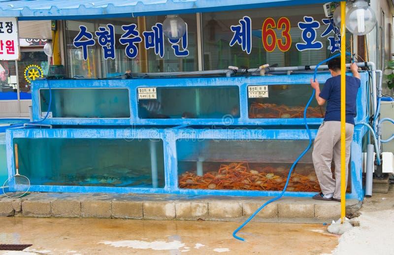 Ny levande fisk på akvarierna av den traditionella koreanska maten royaltyfria foton