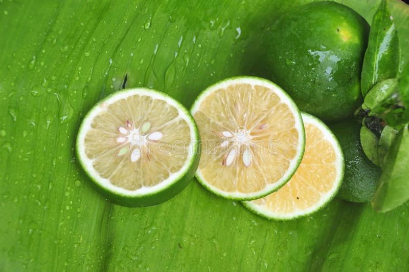 ny limefrukt fotografering för bildbyråer
