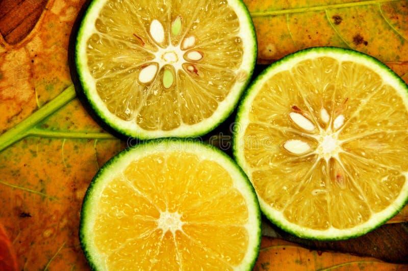 ny limefrukt royaltyfria foton