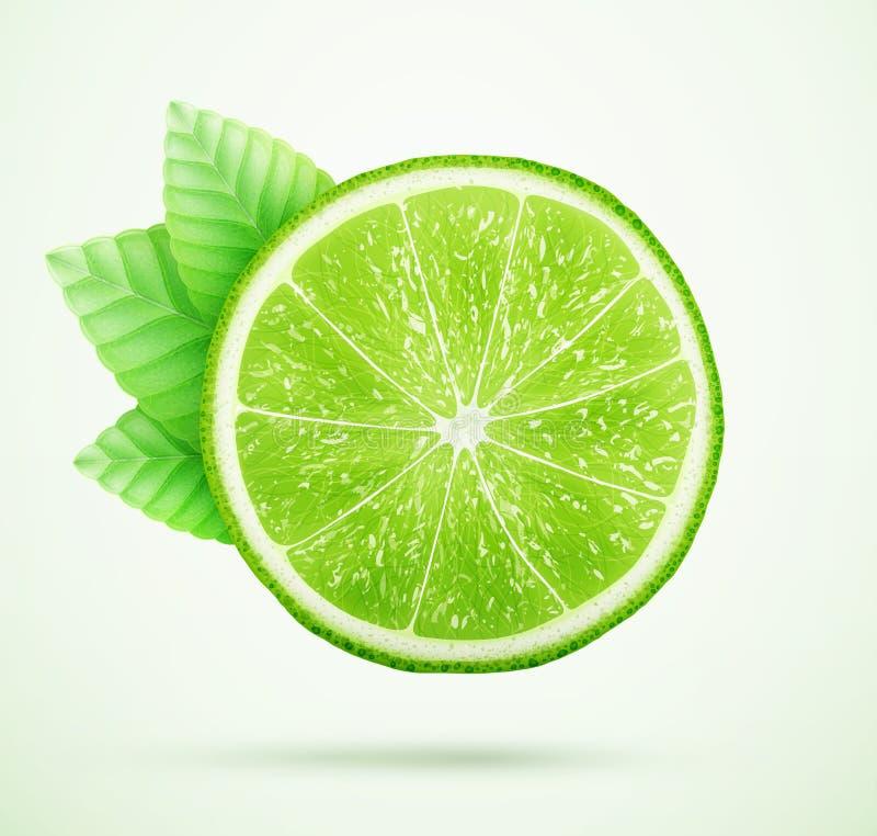 Ny limefrukt med sidor royaltyfri illustrationer