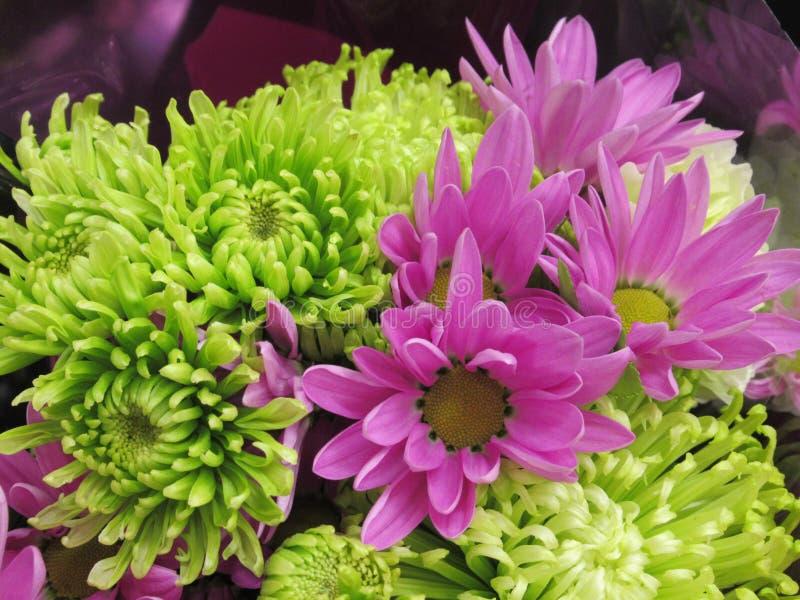 Ny ljus nätt gräsplan för Closeup & purpurfärgade Dahlia Flowers Bouquet arkivbilder