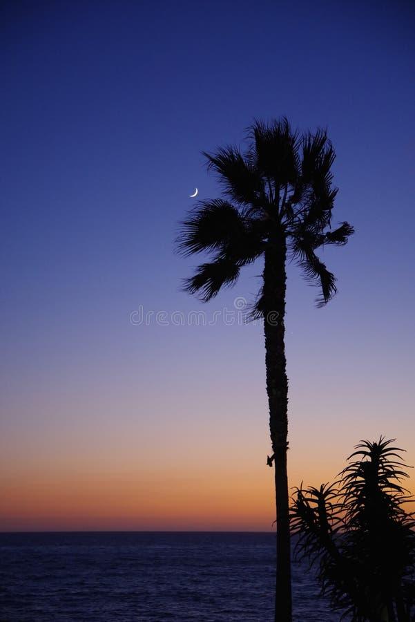 Ny måne, palmträd och havbris royaltyfria foton