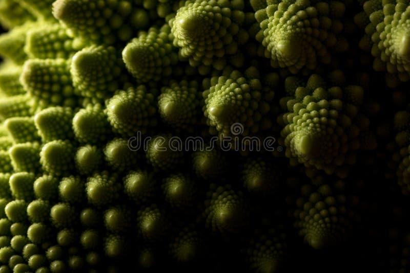 Ny makro för romanescokålgrönsak, selektiv fokus arkivbilder