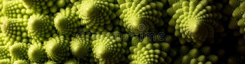 Ny makro för romanescokålgrönsak, selektiv fokus royaltyfri foto