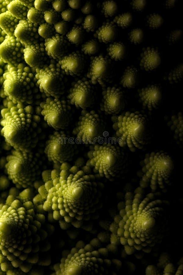 Ny makro för romanescokålgrönsak, selektiv fokus arkivfoto