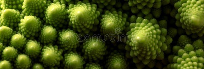 Ny makro för romanescokålgrönsak, selektiv fokus royaltyfri bild